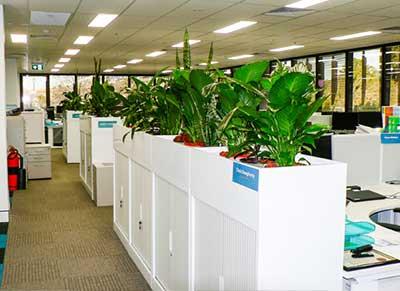 Nowra Indoor Plant Hire