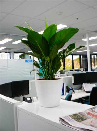 Indoor Plant Hire Nowra