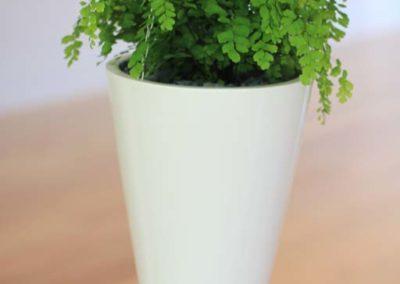 corinda-44-white