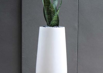 hendra-76-white