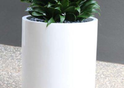 wilston-50-white